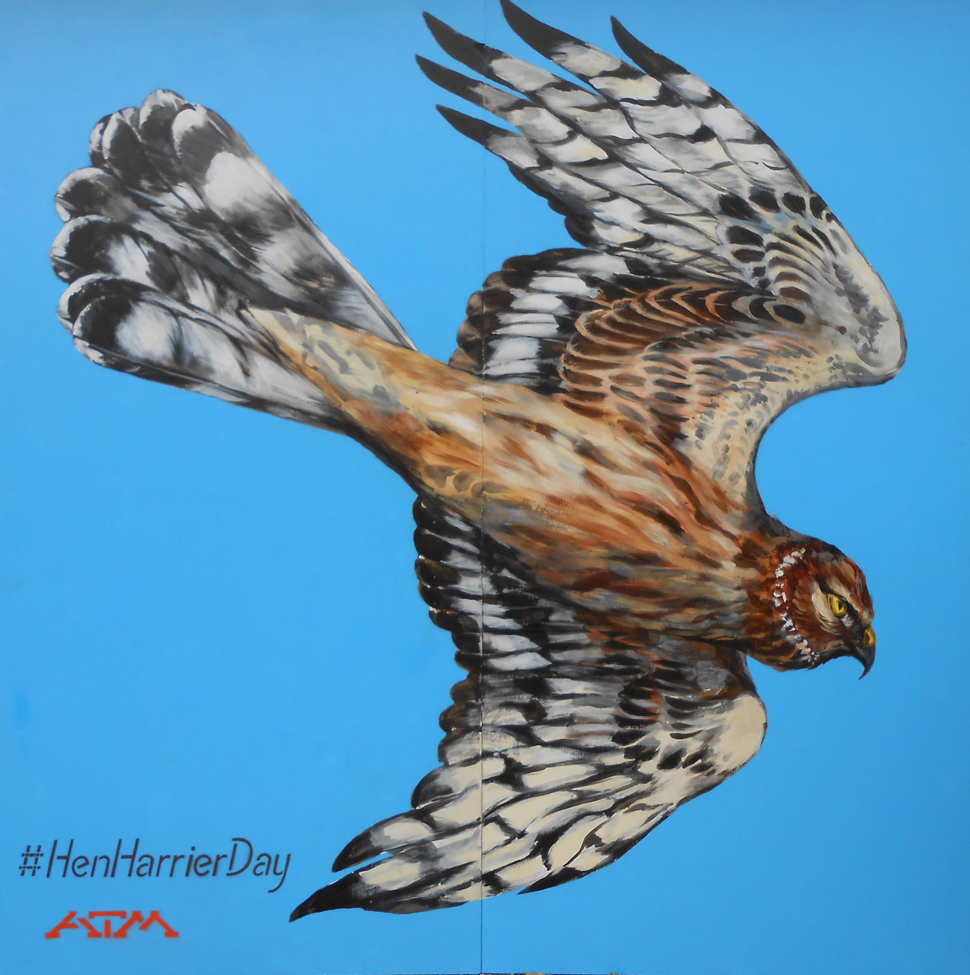 Hen Harrier (female)
